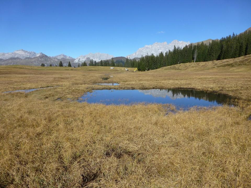Ein im Jahr 2018 wieder-vernässtes Moor im Prättigau GR.