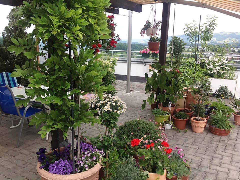 Balkon mit vielen Pflanzen.