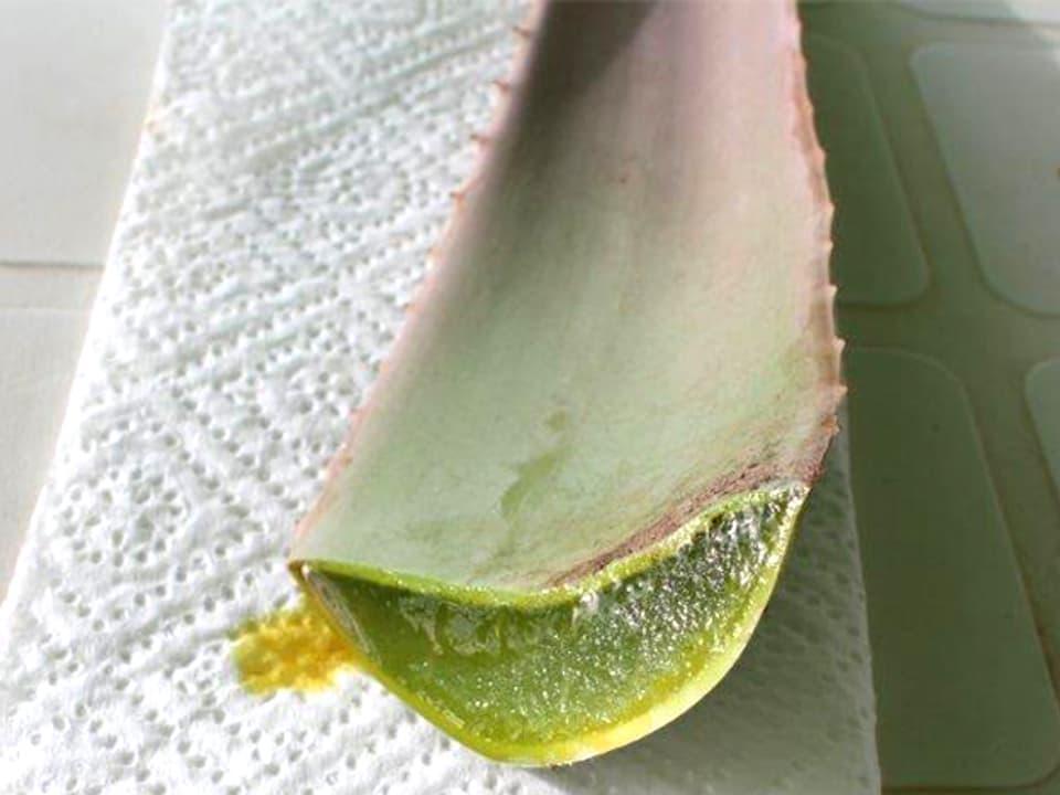 Ein Blatt und Abschnitt der Aloe Pflanze auf Küchenpapier.
