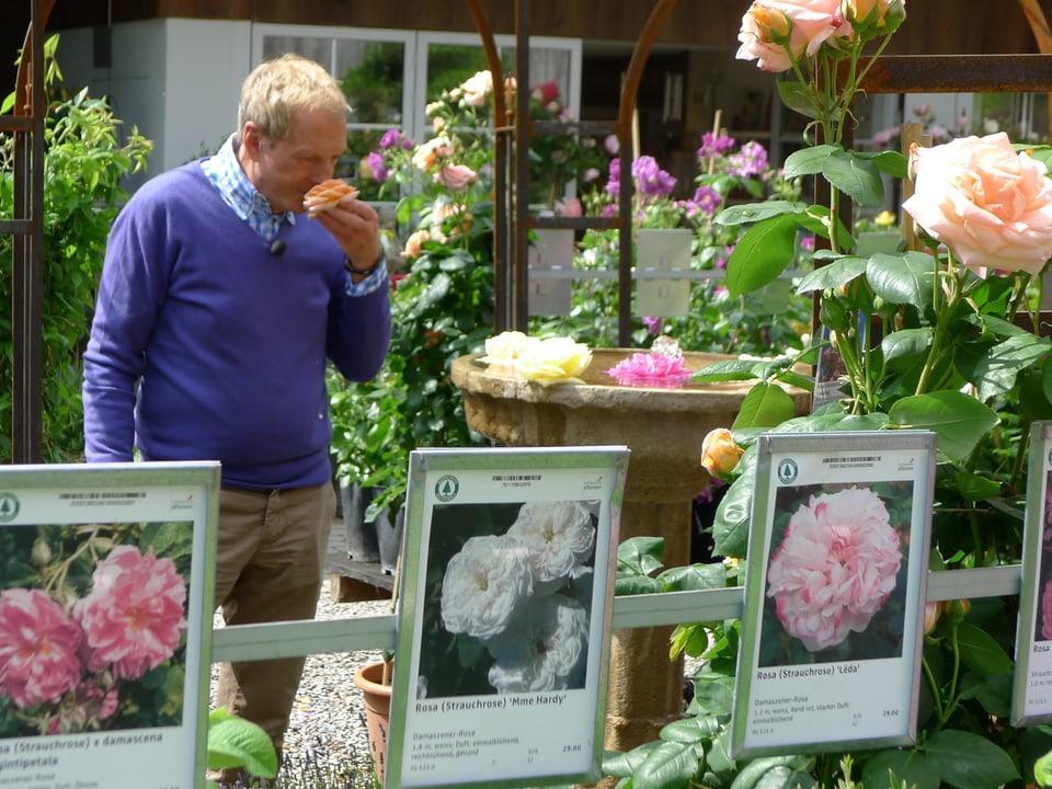 Kurt Aeschbacher hält eine einzelne orangefarbene Rose in der Hand und riecht daran. In einem Steinbecken auf einer Säule schwimmen Rosenblüten. Im Vordergrund sind Schautafeln von Strauchrosen zu erkennen.
