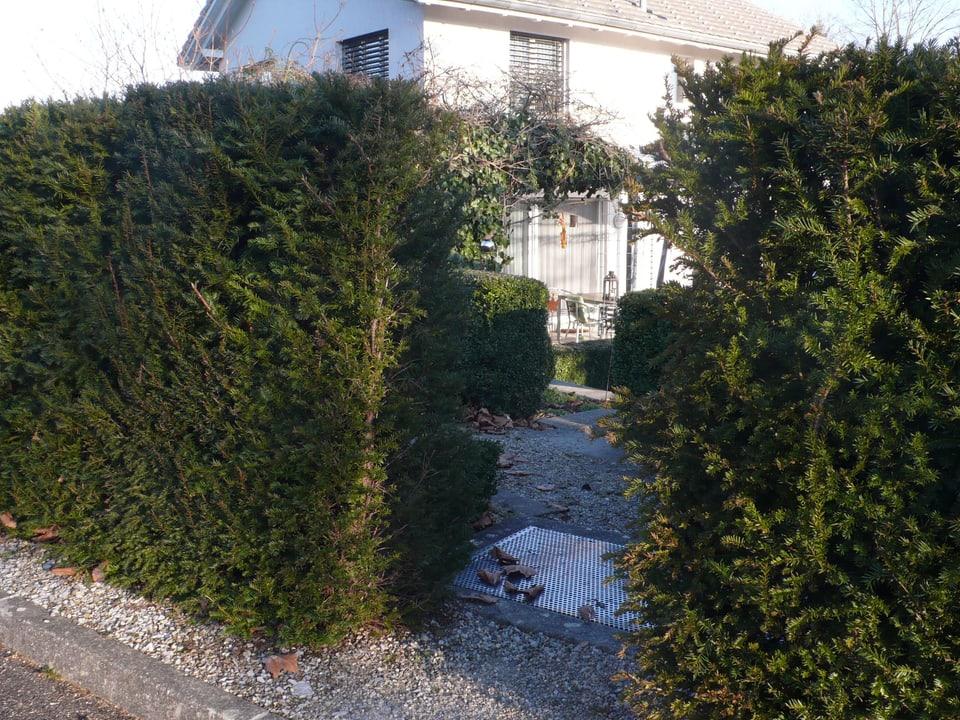 grüne Hecke mit Durchgang