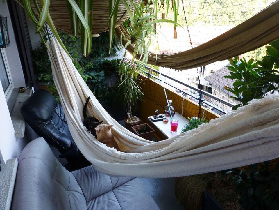 Balkon mit zwei Sesseln, zwei Hängematten und zwei Katzen.