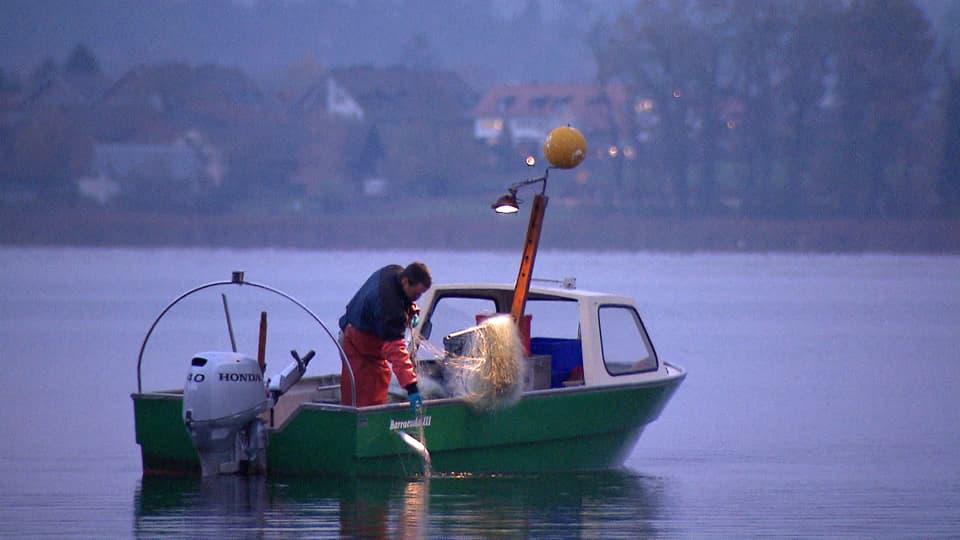 Ein Fischer holt ein Netz im Morgengrauen ein.