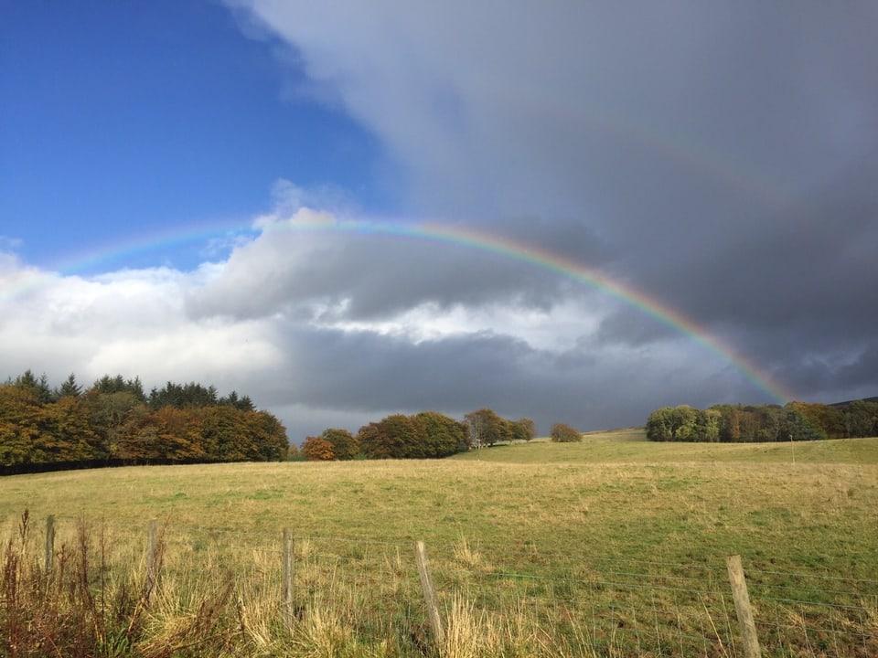 Regenbogen über einer grossen Wiese.