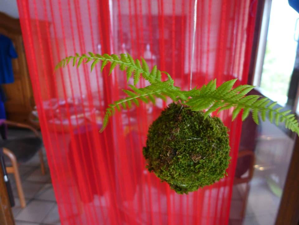Moosball mit Farn hängt vor einem roten Vorhang.