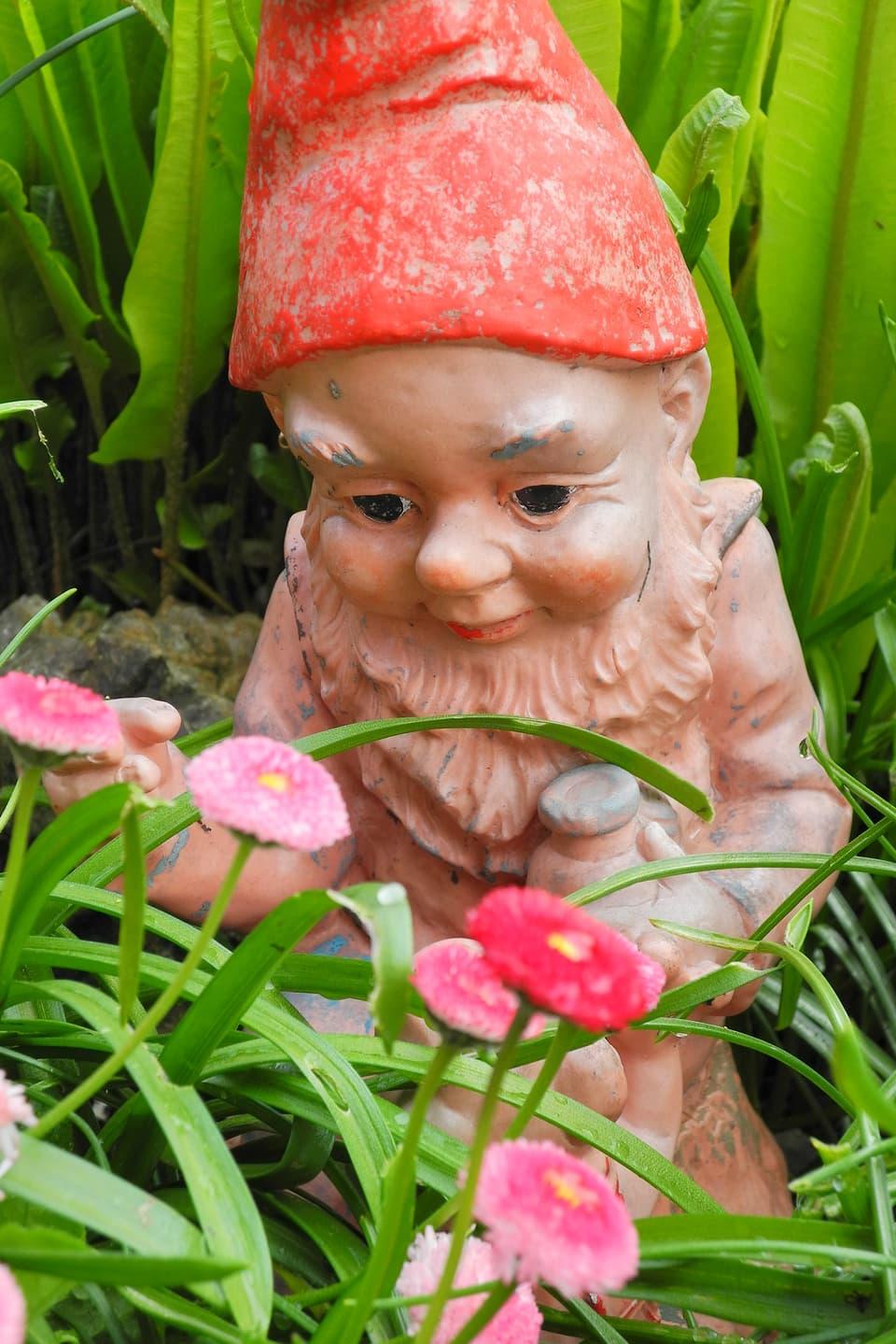 Nahaufnahme eines Gartenzwerges mit je einem Gefäss in der Hand. Er ist erdfarbi und trägt eine rote Zipfelmütze. Darauf sind Spuren des Alters zu sehen. Der Zwerg sitzt mit seinen Lachfalten inmitten von Gartenbürstelis (Bellis perennis).