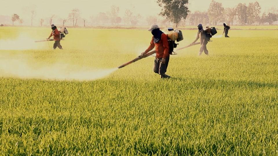 Vier Leute spritzen DDT auf Feld