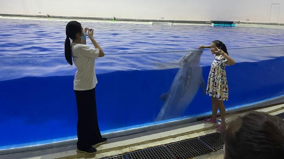 Delfinarien sind ein boomendes Business in China