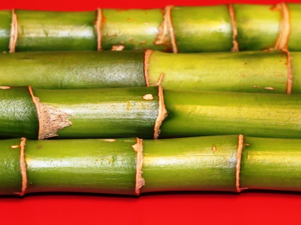 grüne Bambus-Stängel