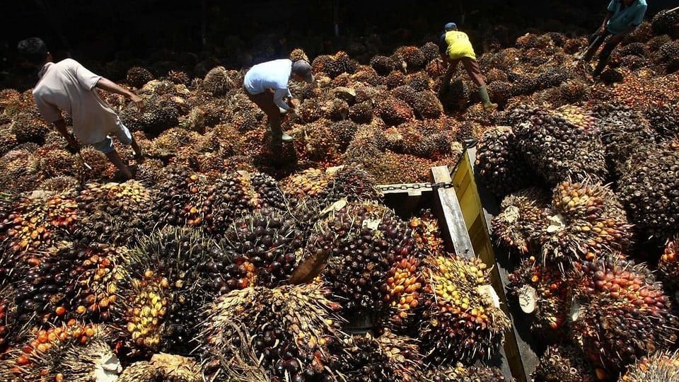 Nachhaltiges Palmöl - Freihandelsabkommen mit Indonesien besiegelt