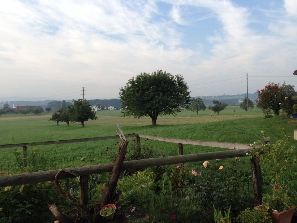 Landschaft im thurgauischen Sommeri.