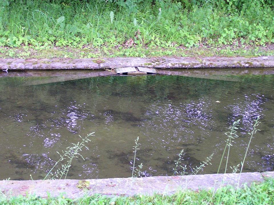 Metallrampe am Teichufer.