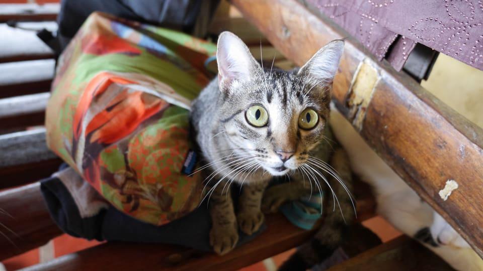 ...eine von 18 Strassenkatzen, die die beiden Schweizer bei sich aufgenommen haben.