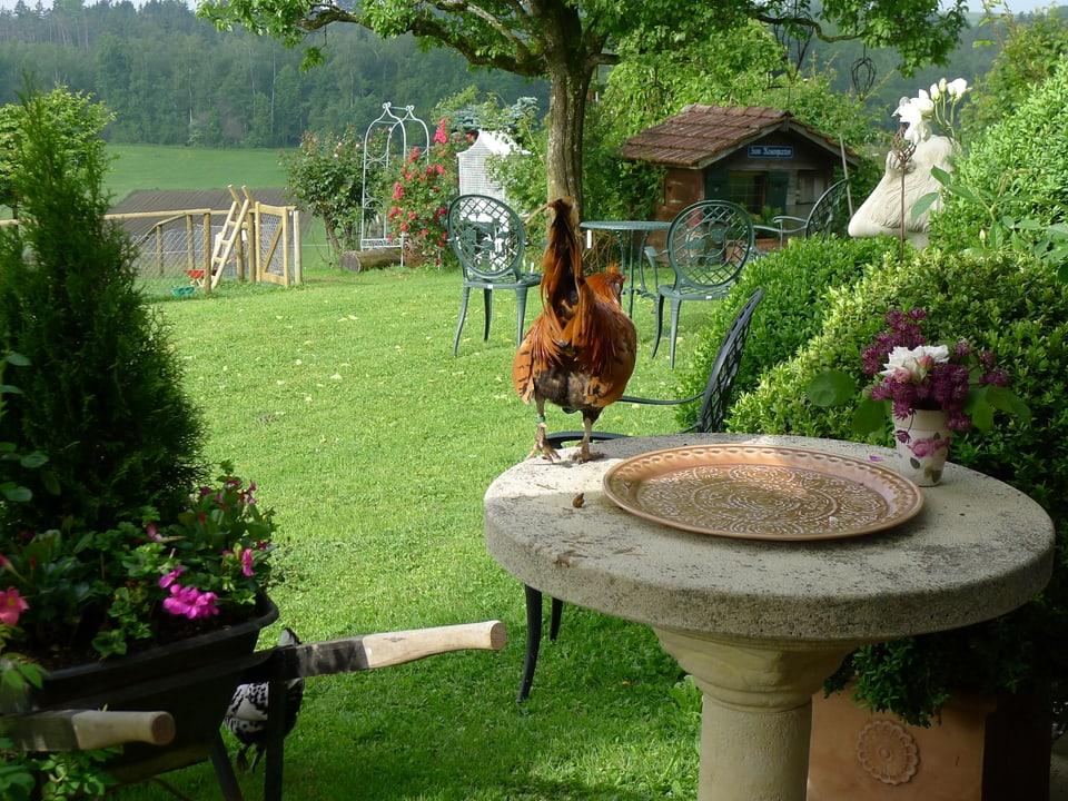 Idylle im Rosengarten. Geschwungene Metallstühle unter einem Baum, im Vordergrund eine Schubkarre mit Geranien. Der Hahn stolziert auf dem Steintisch, auf welchem eine flache Schale und ein Blumensträusschen stehen.