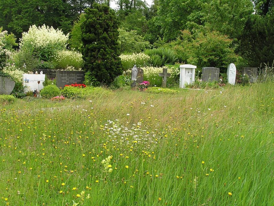 Blumenwiese im Vordergrund, gepflegte Gräber im Hintergrund.