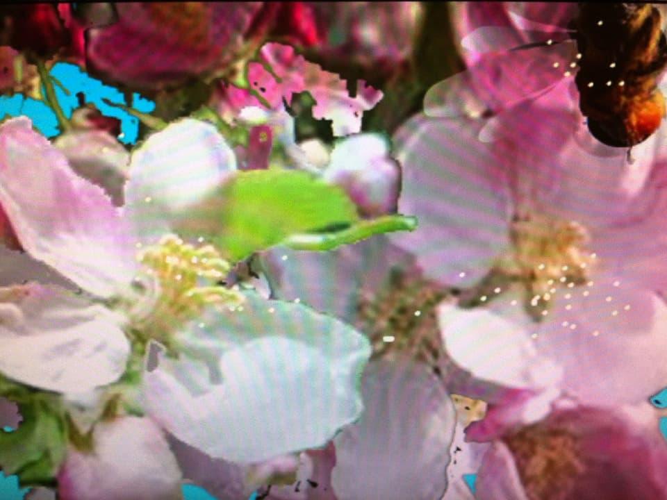 """Bild aus dem fantastischfarbigen Film """"Vom Samen zum Apfel"""" von Anita Zimmermann (2014)"""