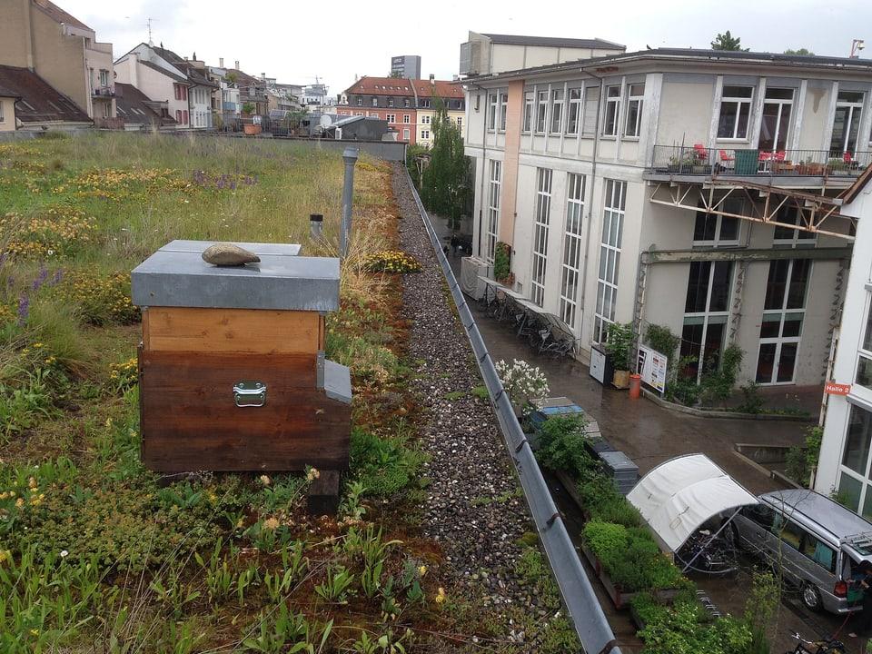 Bienenhaus auf dem Dach eines Industriequartiers in der Stadt.