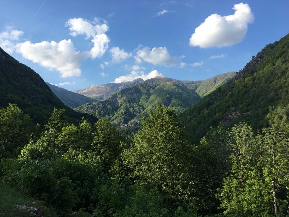 Blick ins Obere Valle Onsernone mit Wäldern, soweit das Auge reicht.