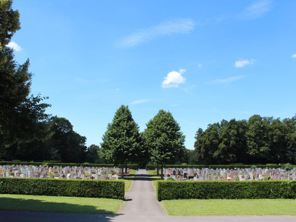 Viele Grabsteine, zwei Bäume in der Mitte.