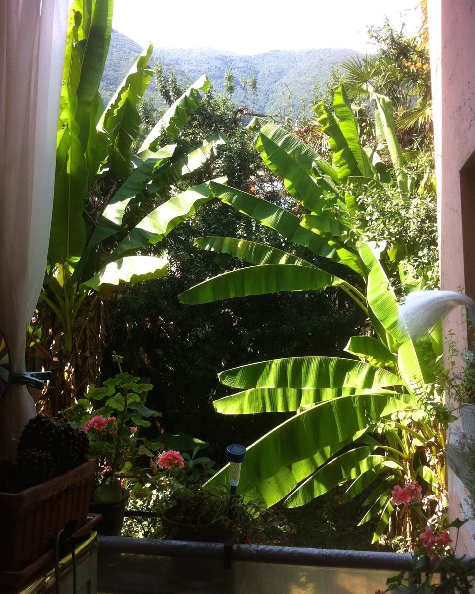 Balkon mit Sicht ins Grüne.