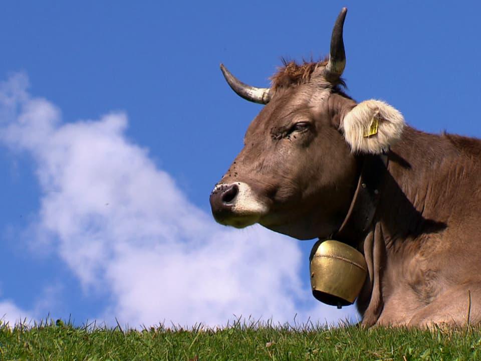 Auf der Höhe: Auch tiergerechte Haltung ist rentabel (Kuh liegt im Gras auf einer Hügelkuppe).