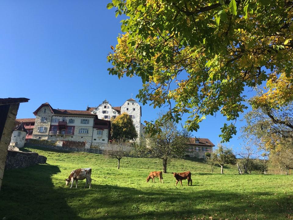 Blick von unten auf das Schloss. Im Vordergrund eine Weie mit Kühen. Sonniges Wetter Ende Sommer.