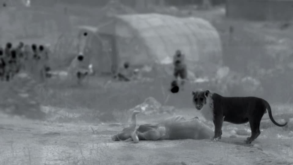 Löwe nachts beim toten Büffel, Menschen schauen zu