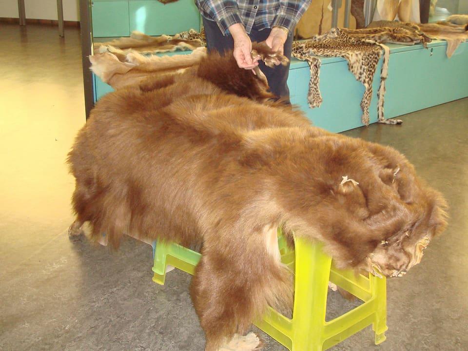 Bärenfell.