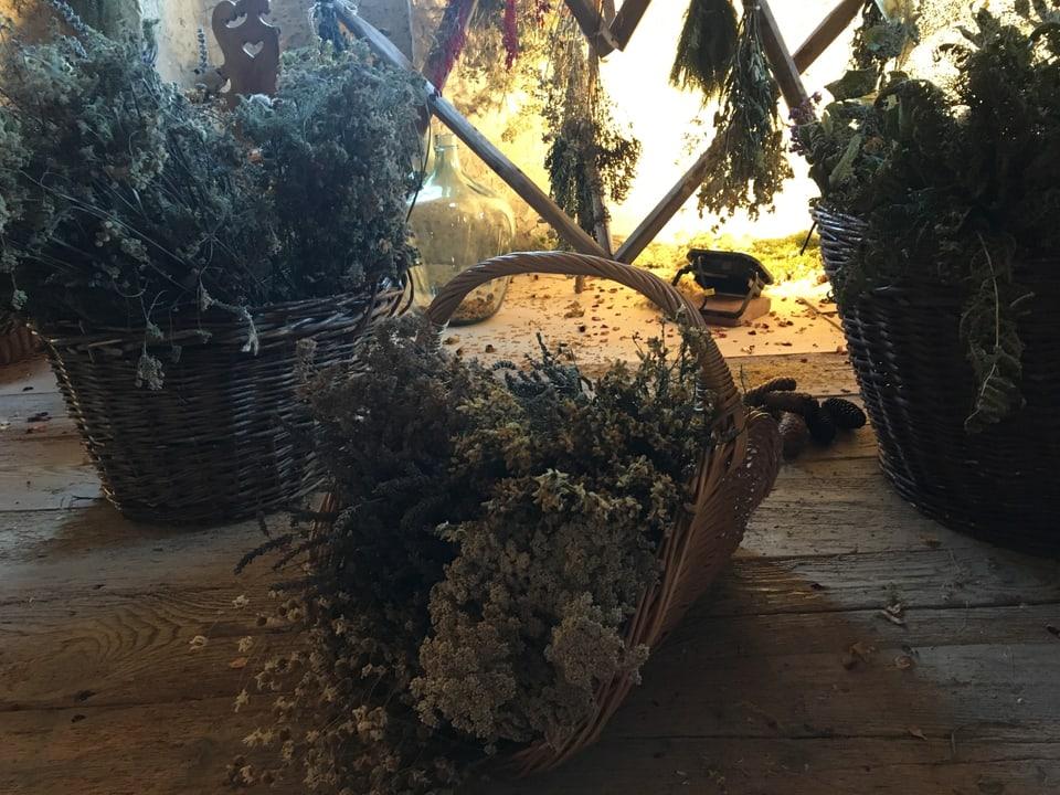 Getrocknete Heilpflanzen und Kräuter auf dem Dachboden des Schlosses.