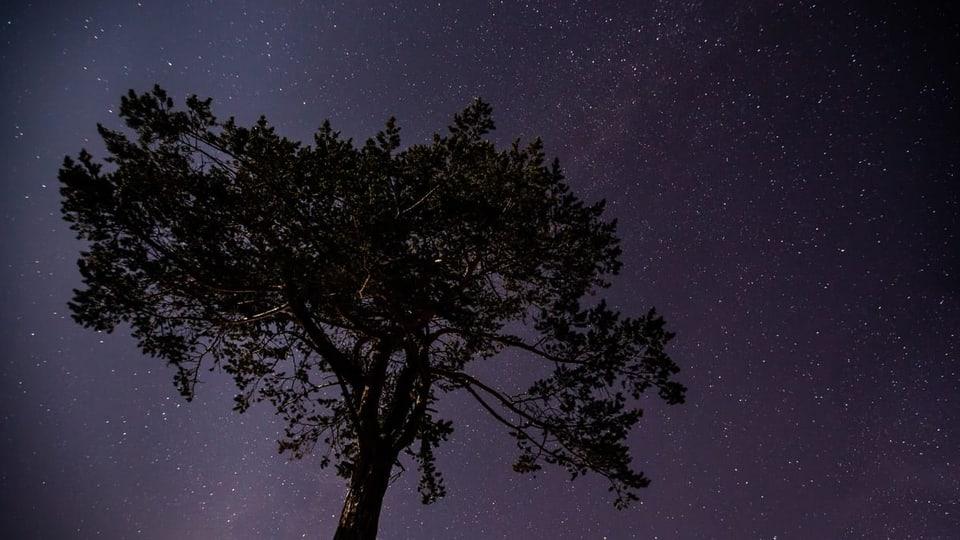 Luzian Schmassmann zur warmen Nacht (SRF1 06:55 Uhr)