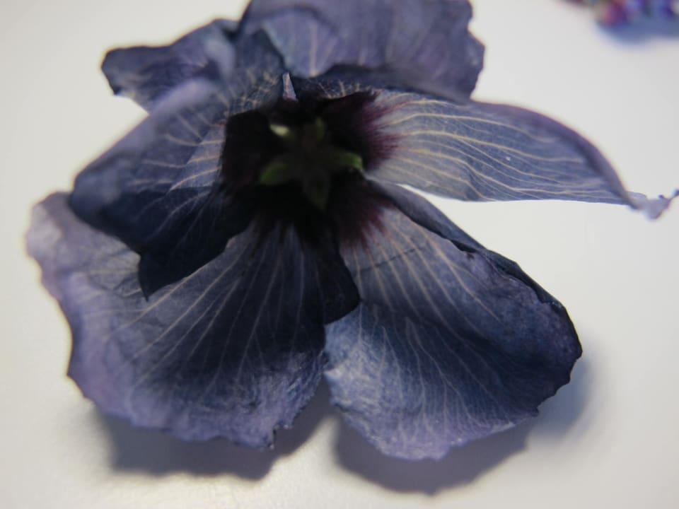 Getrocknete Hibiskus-Blüte