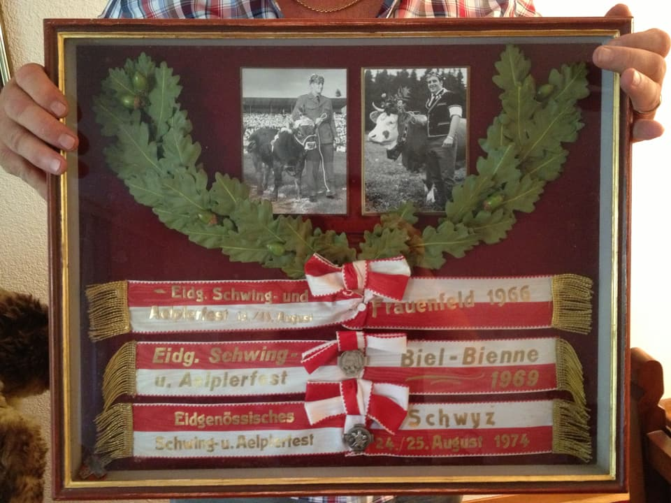 Ruedi Hunsperger zeigt einen Bilderrahmen mit zwei Fotos, die ihn mit Siegermunis zeigen und den drei Siegerbändern von 1966, 1969 und 1974