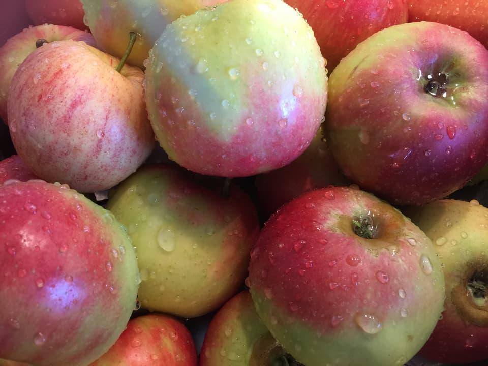 Äpfel, die gewaschen wurden.