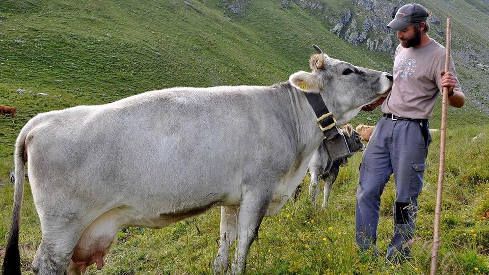 Kuh-Kuss: Die Vertrautheit mit dem Hirten ist Voraussetzung für eine gute Mutterkuhhaltung (Mutterkuh stubst Hirten zätlich mit der Schnautze).