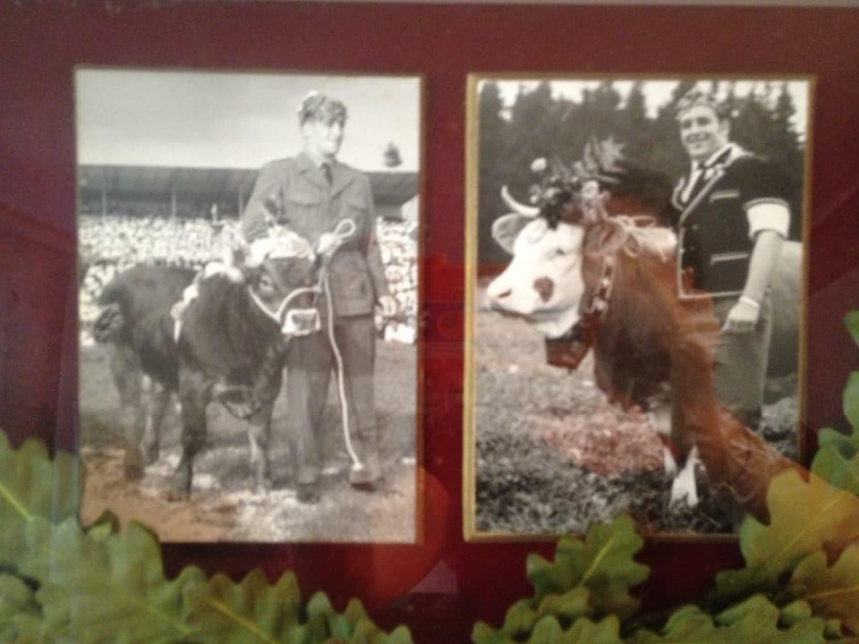 Zwei alte Fotografien, die Ruedi Hunsperger als Schwingerkönig mit dem Siegermuni zeigen.
