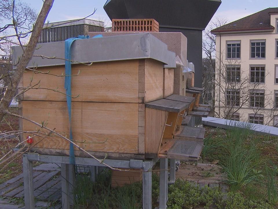Ein Bienenstock in einer bewohnten Gegend.
