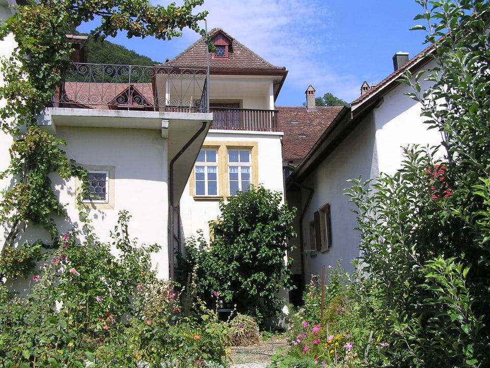 Unter dem Fenster hinter dem Fraubrunnenhaus in Twann steht ein schwarzer Maulbeerbaum.