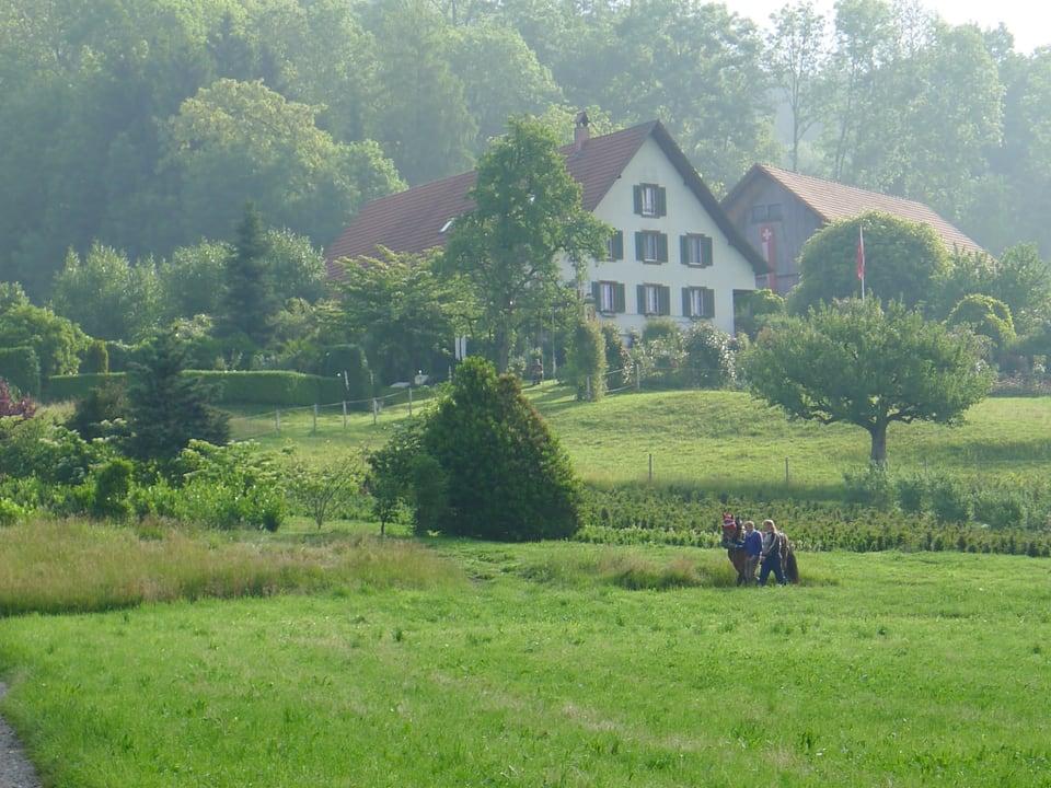 Das Anwesen der Baumschule Reichenbach in Hausen am Albis inmitten grüner Wiesen, mit Baumbestand und dem Pferd auf dem Weg zur Arbeit.