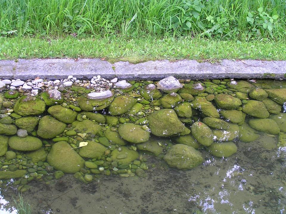 Teichufer mit Steinen.