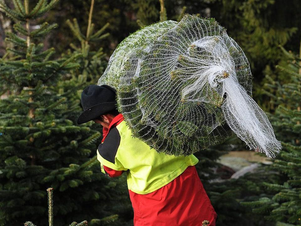 Ein Mann transportiert einen Tannenbaunm in einem Netz.