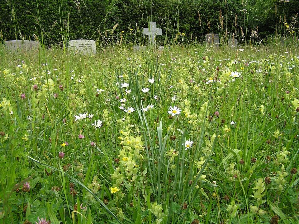 Eine Blumenwiese auf dem Friedhof, im Hintergrund Grabsteine.