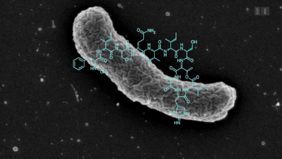 Hoffnung auf neues Antibiotikum