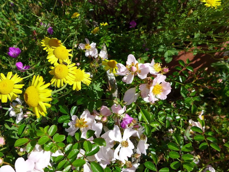 Potpourri aus gelben und rosaroten Blüten.