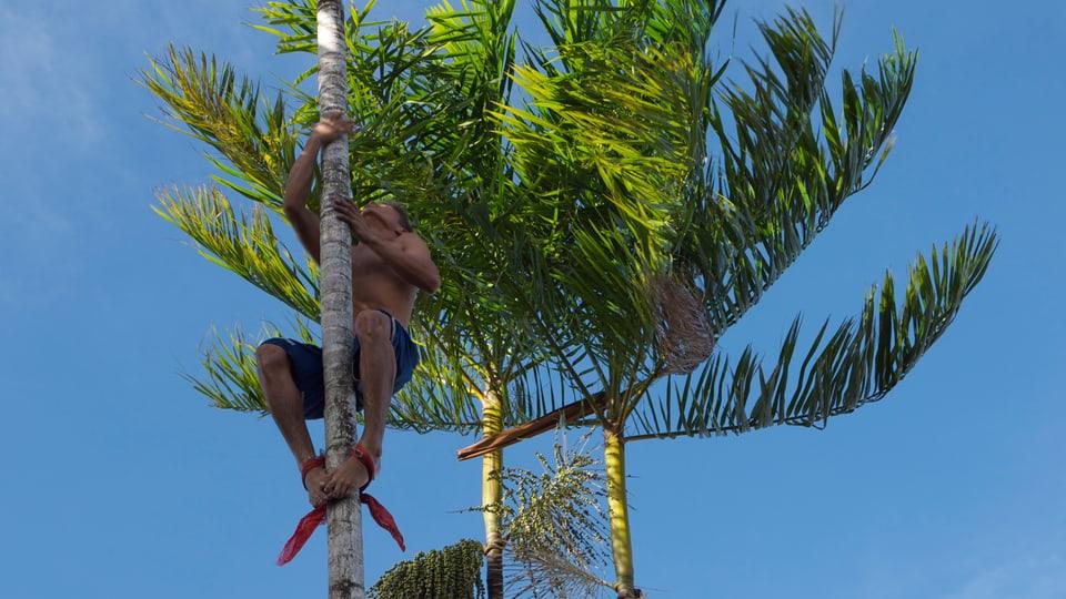 Ein Bewohner des Bailique-Archipels wagt sich die Açaí-Palme hinauf zur Wunderfrucht.