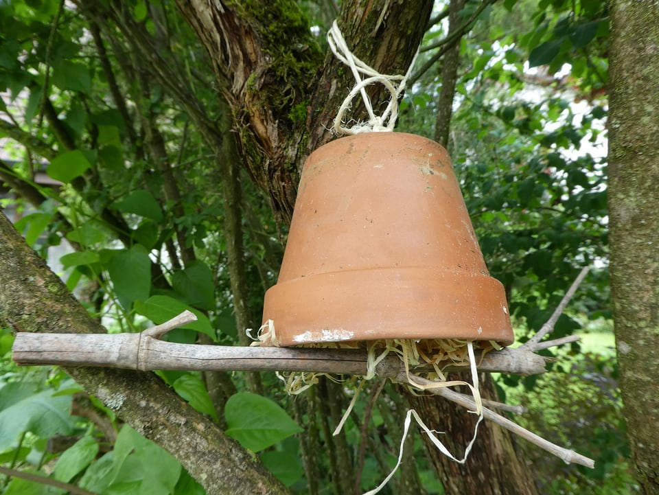 Ein Tontopf, der an einem Ast in der Nähe eines Baumstamms hängt.