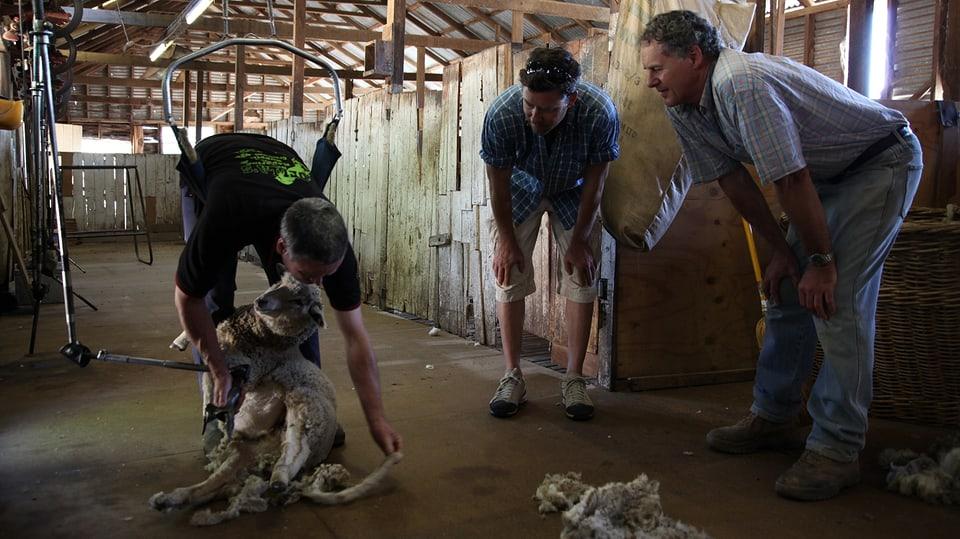 Auf der Schaf-Farm von Charlie Prell