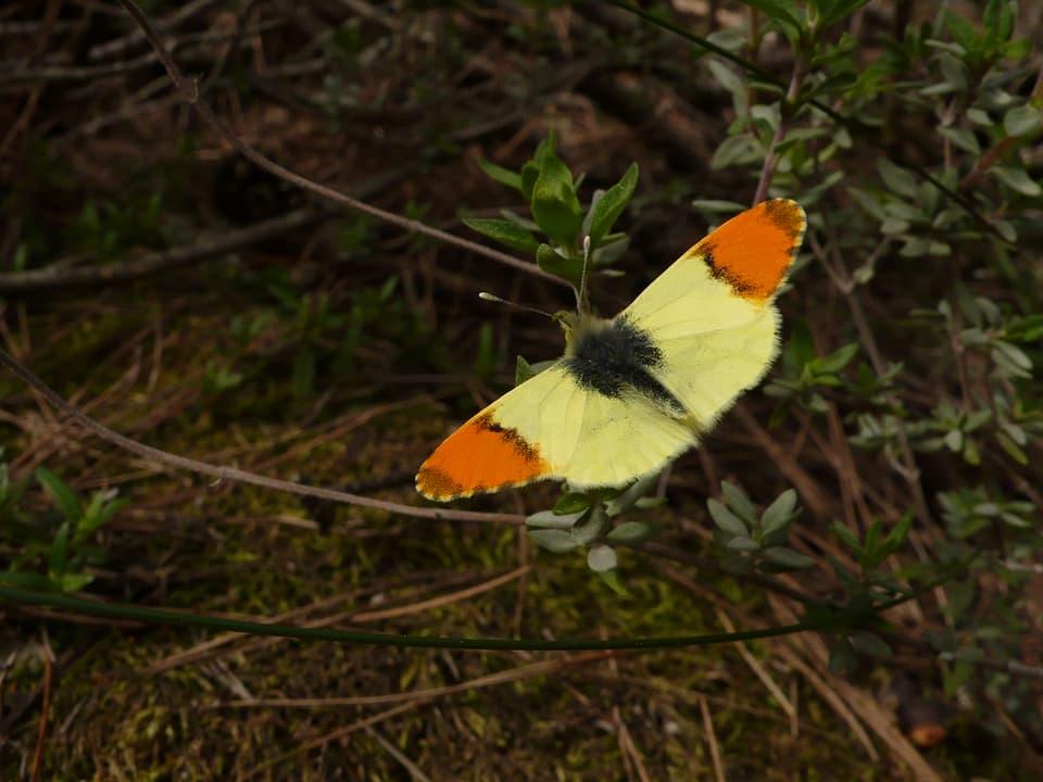 Schmetterling fliegt über Boden