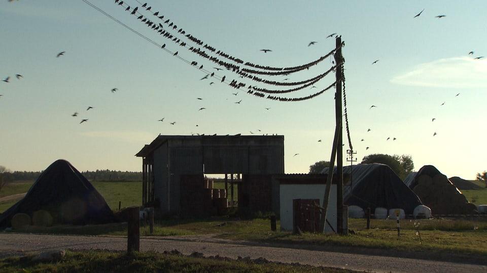 Fliegende Vögel über Bauernhof:Auch in der russischen Provinz gilt Präsident Putin als der grosse Hoffnungsträger.