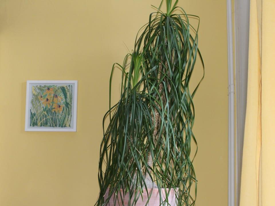 Pflanze vor Bild