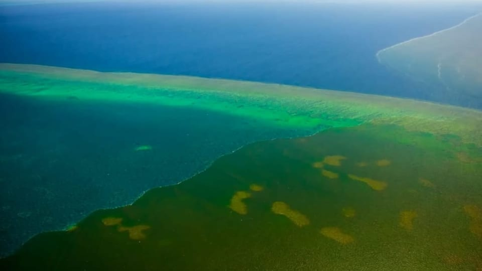 Dreckwasser bedroht das Great Barrier Reef (Artikel enthält Video)